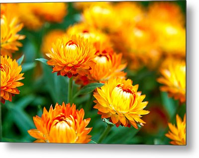 Spring Flowers In The Afternoon Metal Print by Az Jackson