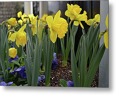 Spring In Yellow Metal Print by Larry Bishop