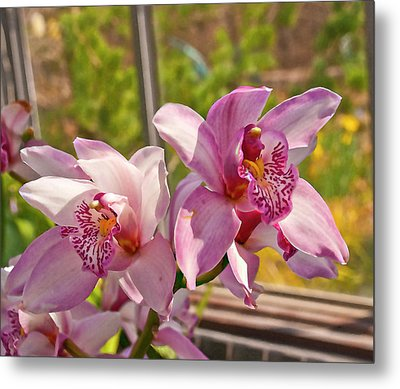 Spring Orchids Photograph Metal Print by Don  Wright