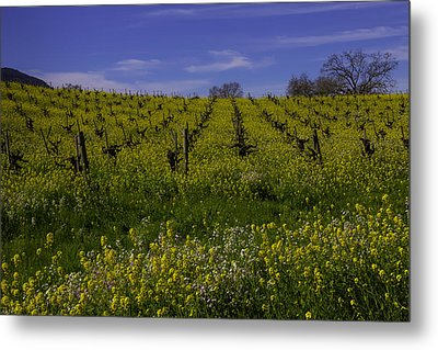 Springtime Vineyards Sonoma Metal Print by Garry Gay