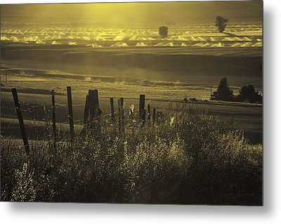 Sprinklers At Sunrise In The Wallowa Valley Metal Print by Alvin Kroon