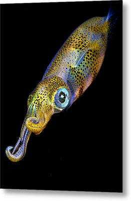 Squid At Night Metal Print by Rico Besserdich