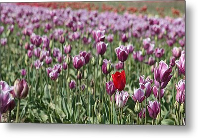 Standing Out In A Crowd Metal Print by Nick Gustafson