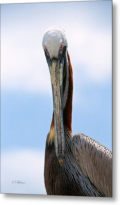 Stare Down Metal Print by Christopher Holmes
