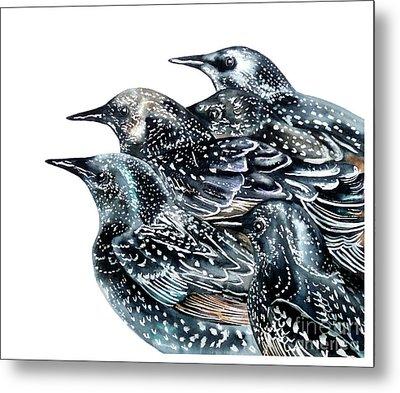 Starlings Metal Print by Marie Burke