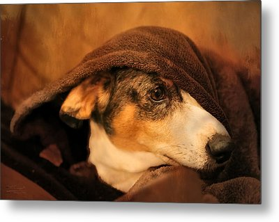 Stewie Under Cover Metal Print by Theresa Campbell