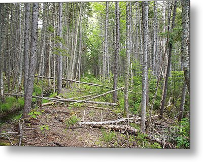 Stillwater Junction - White Mountains New Hampshire  Metal Print by Erin Paul Donovan