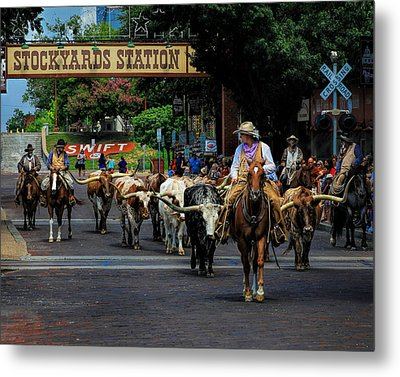Stockyards Cattle Drive Metal Print by David and Carol Kelly