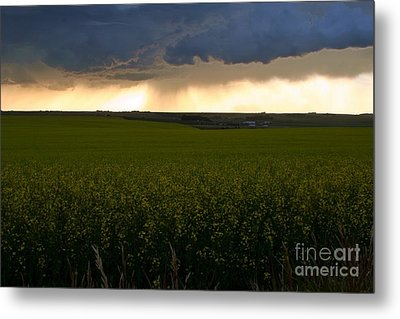 Storm Over The Canola Fields Metal Print by Mario Brenes Simon