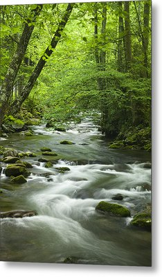 Stream In The Smokies Metal Print by Andrew Soundarajan