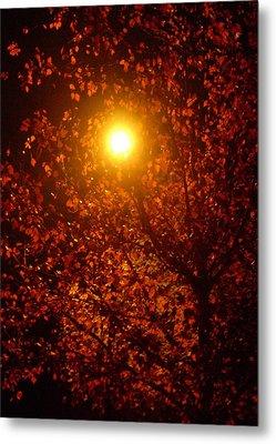 Streetlamp Through Tree Metal Print by Utopia Concepts