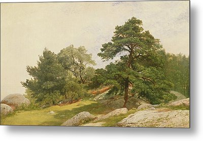 Study For Trees On Beverly Coast Metal Print by John Frederick Kensett