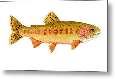 Study Of A Golden Trout Metal Print by Thom Glace