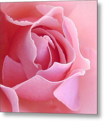 Sugar Of Rose Metal Print by Jacqueline Migell