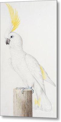 Sulphur Crested Cockatoo Metal Print by Nicolas Robert