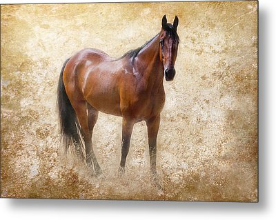 Summer Bay Metal Print by Michelle Wrighton