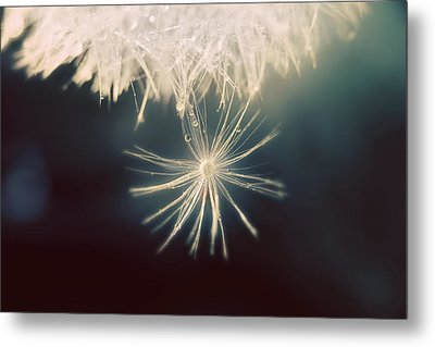 Summer Snow Metal Print by Amy Tyler