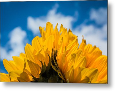 Summertime Happiness Metal Print by Shelby Young