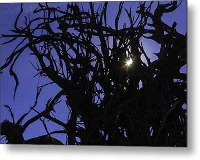 Sun Through Tree Roots Metal Print by Garry Gay