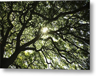 Sunburst Through Tree Metal Print by Brandon Tabiolo - Printscapes