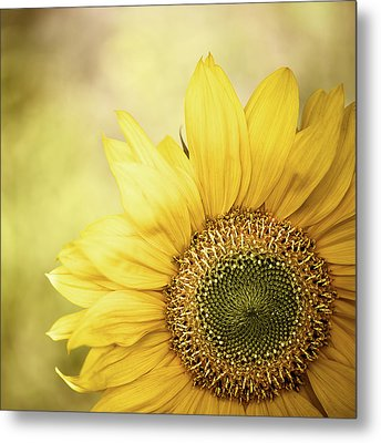 Sunflower Blossom With Bokeh Background Metal Print by Elisabeth Schmitt