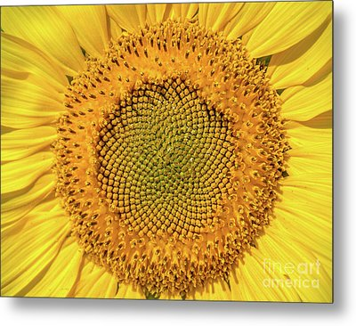 Sunflower Center Metal Print by Cheryl Baxter