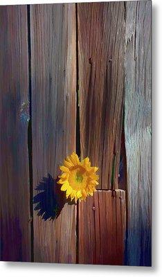 Sunflower In Barn Wood Metal Print by Garry Gay