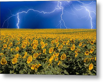 Sunflower Lightning Field  Metal Print by James BO  Insogna