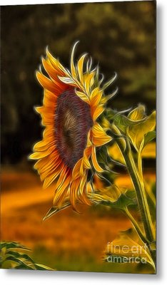 Sunflower Series Metal Print by Wendy Mogul