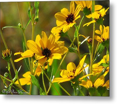 Sunflowers Along The Trail Metal Print by Barbara Bowen