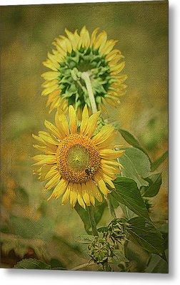 Sunflowers Back To Back By Sandi O' Reilly Metal Print by Sandi O'Reilly