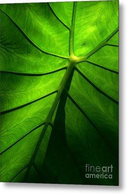 Sunglow Green Leaf Metal Print by Patricia L Davidson