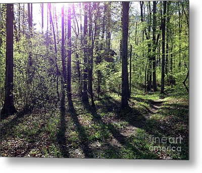 Sunlight From The East Metal Print by Janet Felts