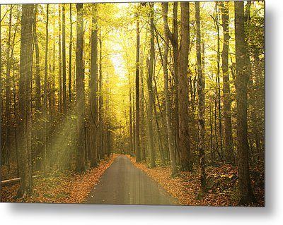 Sunny Roaring Fork Road Metal Print by Jonas Wingfield