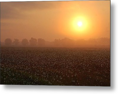 Sunrise And The Cotton Field Metal Print by Michael Thomas
