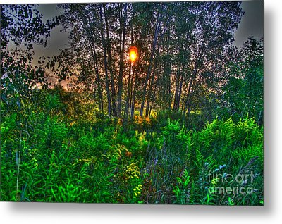 Sunrise In The Swamp-4 Metal Print by Robert Pearson
