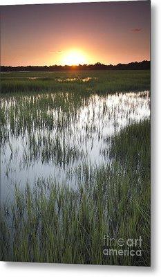 Sunset Marsh Grass Metal Print by Dustin K Ryan