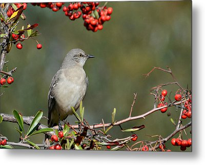 Surrounded By Berries 2 Metal Print by Fraida Gutovich