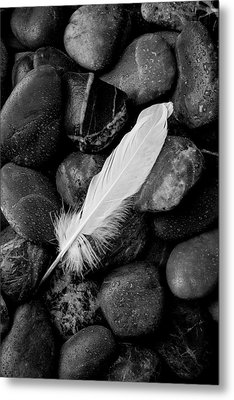 Swan Feather Black And White Metal Print by Garry Gay