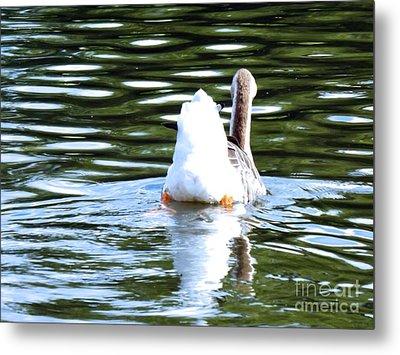 Swan Lake #2 Metal Print by Robyn King
