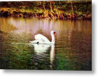 Swan Lake Metal Print by Bill Cannon