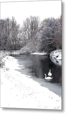Swans In The Snow Metal Print by Gary Eason