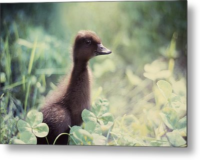 Sweet As Clover Metal Print by Amy Tyler