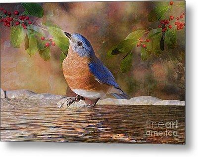 Sweet Little Bluebird  Metal Print by Bonnie Barry
