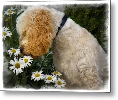 Taking Time To Smell The Flowers Metal Print by Susan Candelario