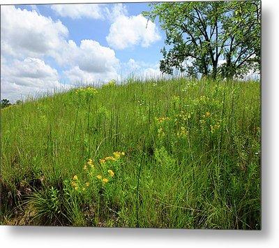 Tall Grass Hillside Metal Print by Scott Kingery