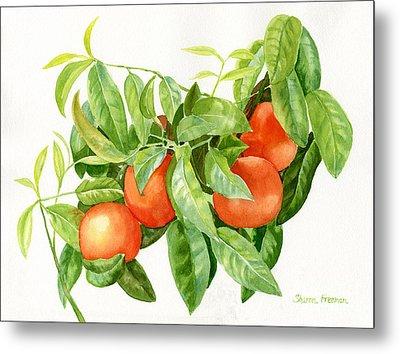Tangerines With Leaves Metal Print by Sharon Freeman