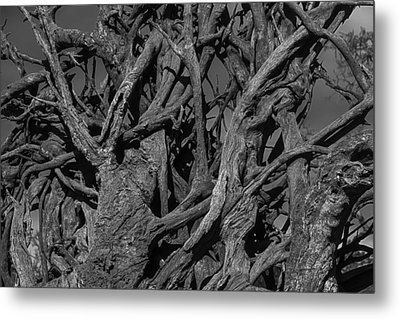 Tangled Tree Roots Metal Print by Garry Gay
