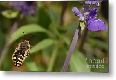 Target In Sight - Honey Bee  Metal Print by Steven Milner