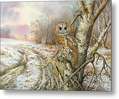 Tawny Owl Metal Print by Carl Donner